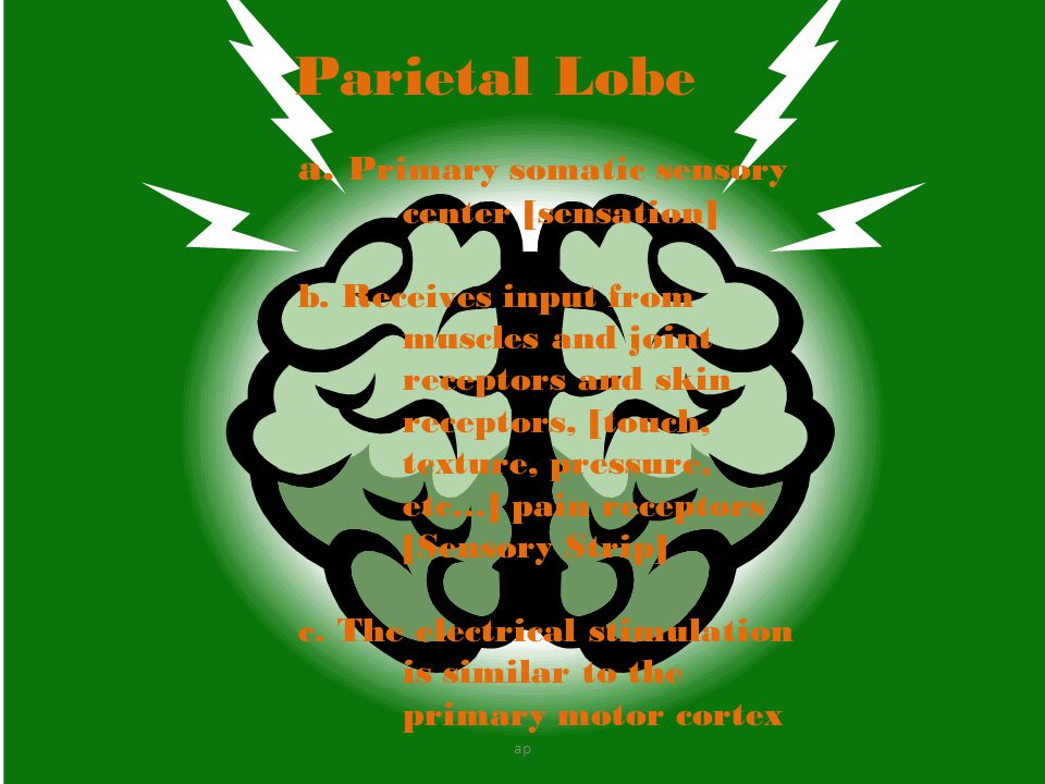 Parietal Lobe a. Primary somatic sensory center [sensation]